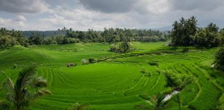 How Paddy-i Financing Can Help Rice Planting Activities