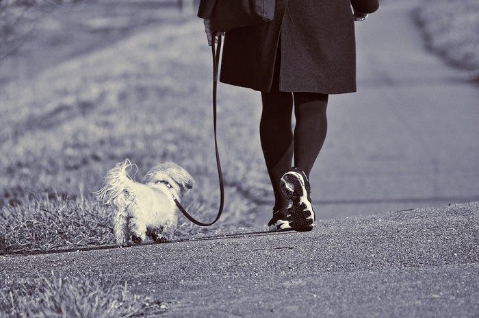 Fun and Quirky Business Ideas for Dog Walking in Malaysia